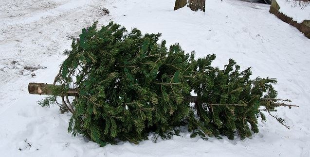 Christmas Tree Collection